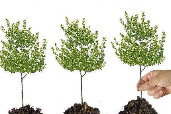 Iniziativa di Cilento Lifestyle: piantumazione di alberi nel proprio giardino scolastico, si parte a Pollica
