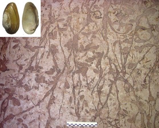 Etiopia, giochi nell'acqua della preistoria: trovate le più antiche impronte di bimbi