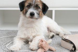 """""""Home alone, your doggie podcast"""": arriva il primo prodotto di audio entertainment solo per cani"""