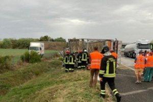 Tremila galline morte e 7mila in fuga sull'A14 a Forlì: pandemonio in autostrada, un camionista ferito