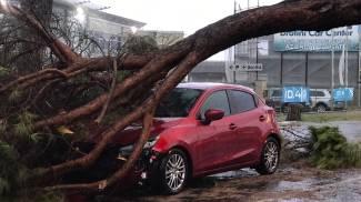 Auto travolta da un albero a Massa