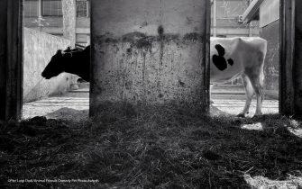 La foto di Pier Luigi Dodi finalista all'Animal Friends Comedy Pet Photo Awards